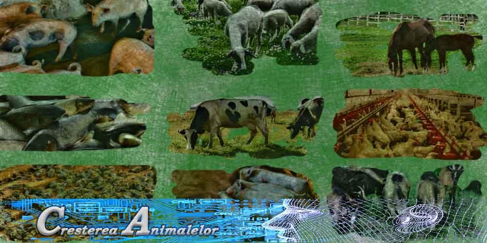 animale, bovine, bubaline, cabaline, ovine, caprine, porcine, pasari, pesti, melci, albine, caini rasa
