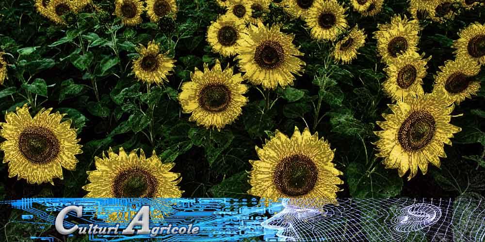 culturi agricole cereale plante leguminoase arbusti sere solarii rasadnite livezi vie pepiniere