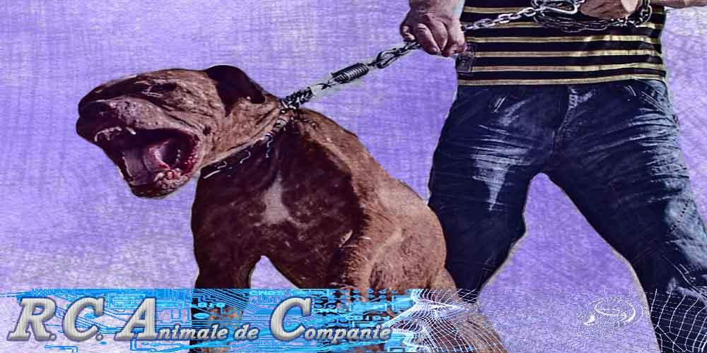 raspundere civila legala animale companie caini