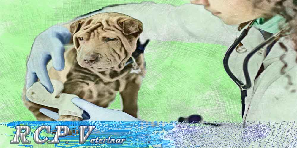 raspundere civila profesionala malpraxis veterinari cabinete veterinare